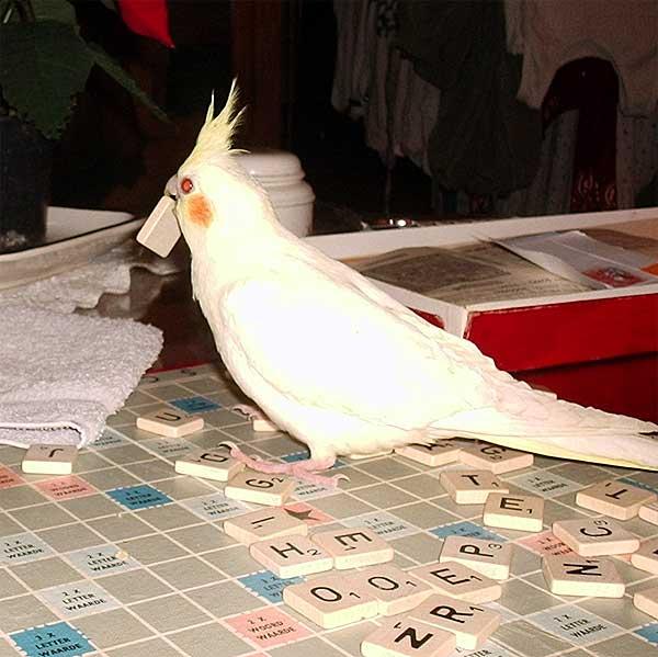 Soorten vogels voor in huis
